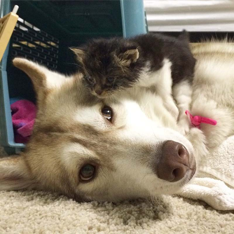 Lilo adoptó a Rosie