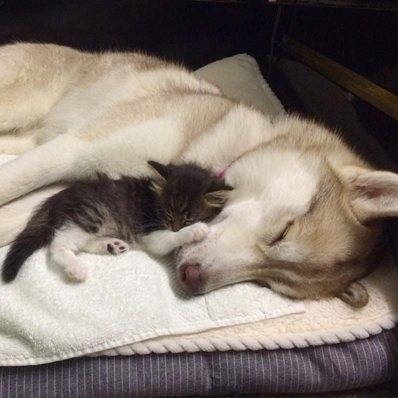 Perra y gatito
