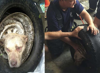 perra abandonada atrapada en un neumático