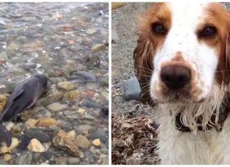 Perra salva a bebé delfín varado en una playa