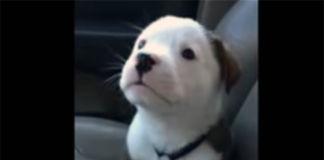 cachorro se enoja al escuchar su hipo