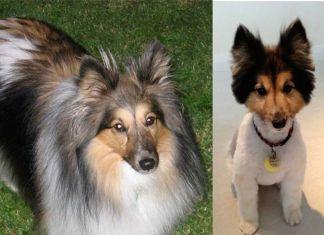 Curiosas fotos de perros antes y después de ir a la peluquería