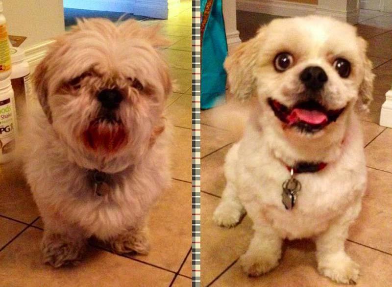 perros-antes-y-después-de-peluquear-11
