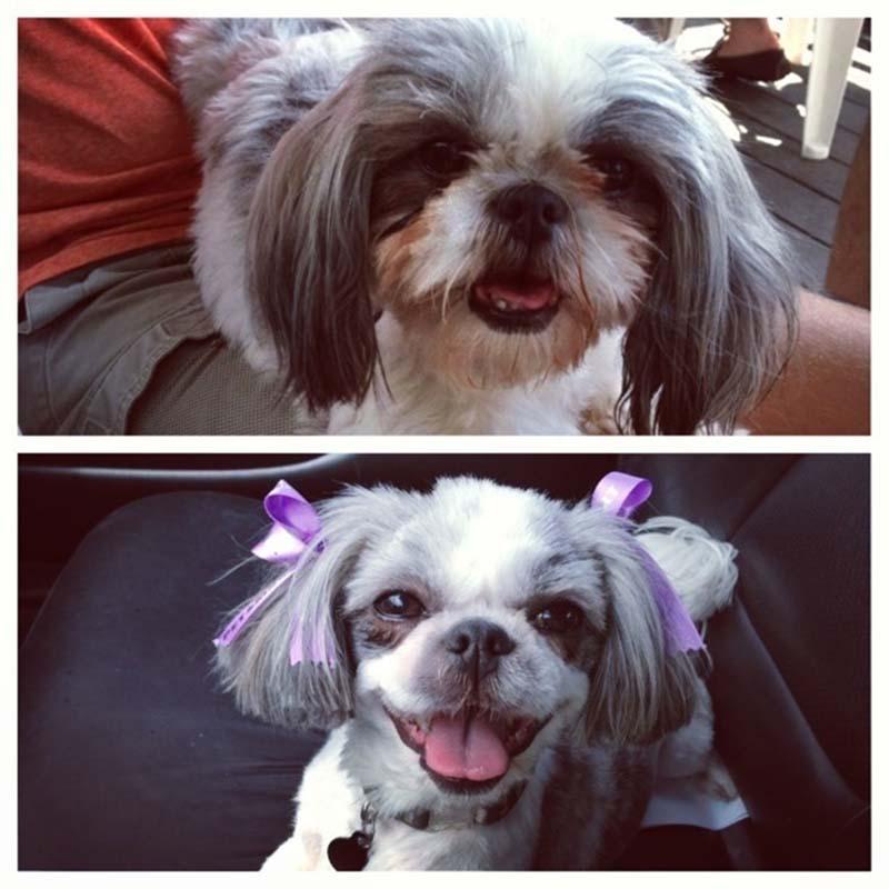 perros-antes-y-después-de-peluquear-13
