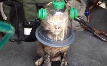 reviven-gatito