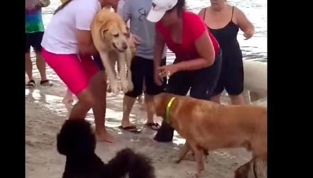 salvan-a-perra-a-punto-de-morir-ahogada