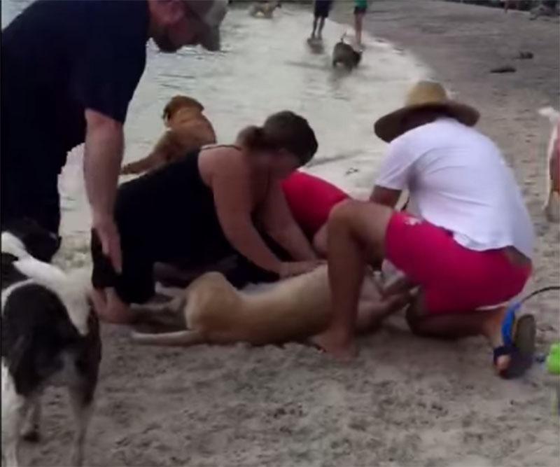 Salvan a perra a punto de morir ahogada
