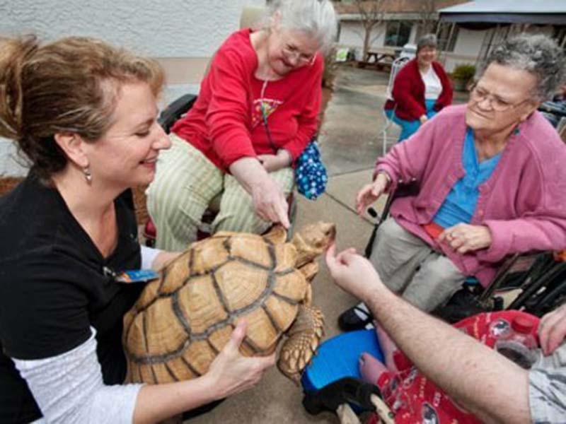 tortuga-en-hogar-de-ancianos