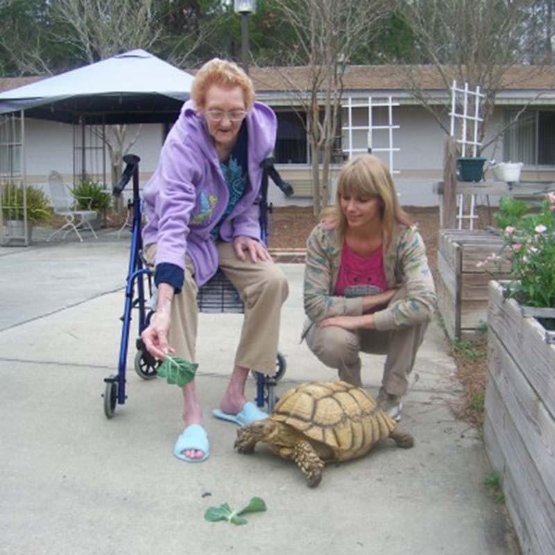 tortuga-feliz-con-ancianos