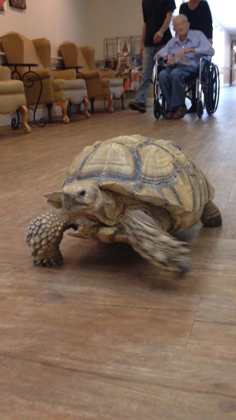 tortuga-shelly-centro-de-rehabilitación