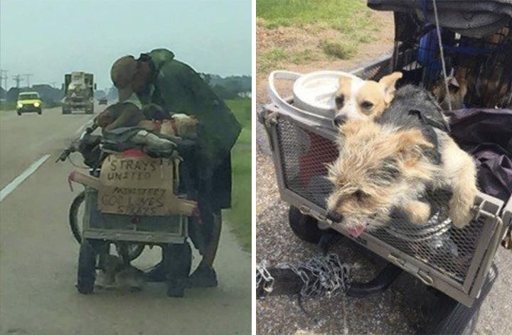 Hombre viaja con sus perros