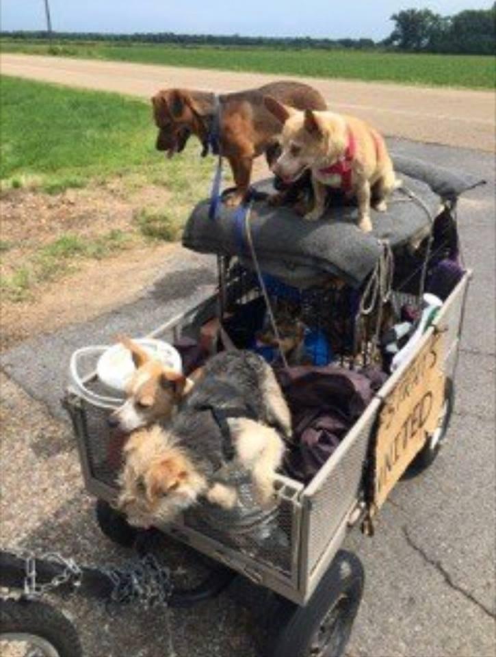 Hombre y sus perros en el hotel