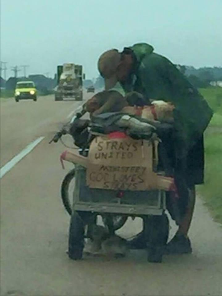 Once perros viajan con su humano