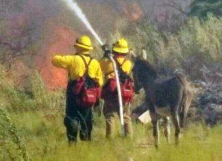 burro escapa de un incendio