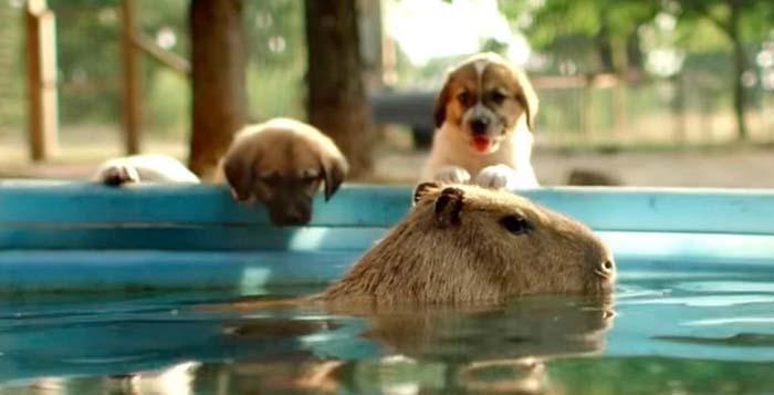 cachorros-tienen-madre-adoptiva-inusual-1