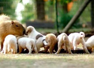 Cachorros huérfanos tienen madre inusual