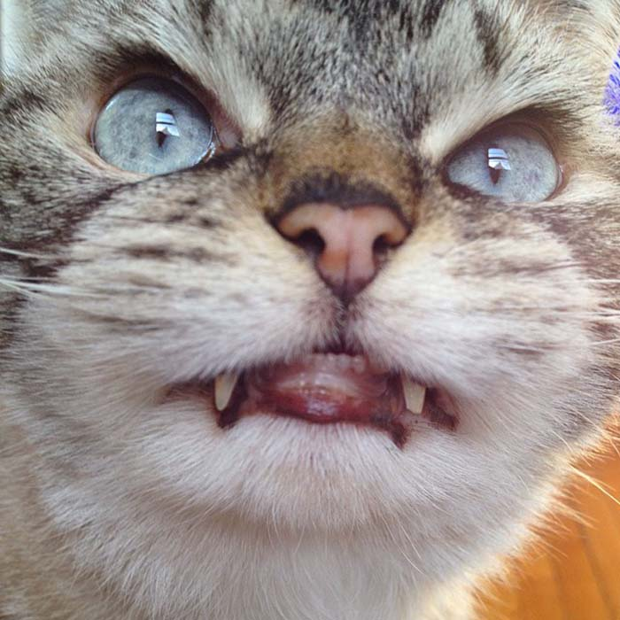 gato-con-mirada-malvada-1