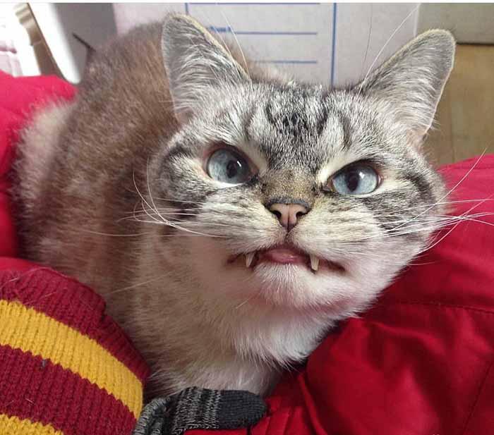 gato-con-mirada-malvada-5