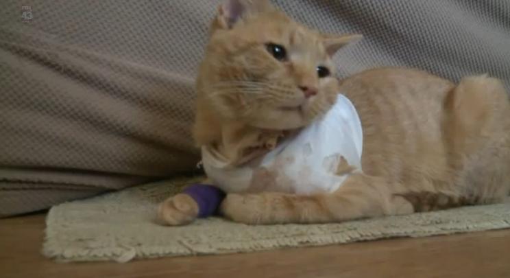 Gato salva a un niño