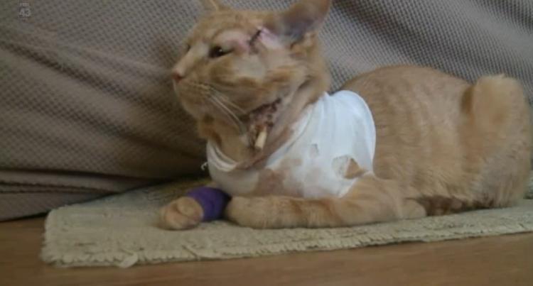 gato-héroe-salva-la-vida-de-un-niño-3