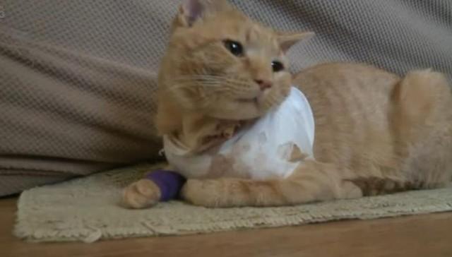 Un gato héroe salva la vida de un niño de tres años