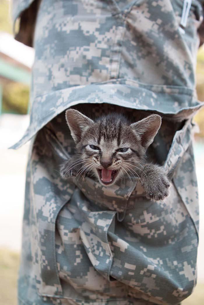 gatos-y-soldados-amigos-de-guerra-11
