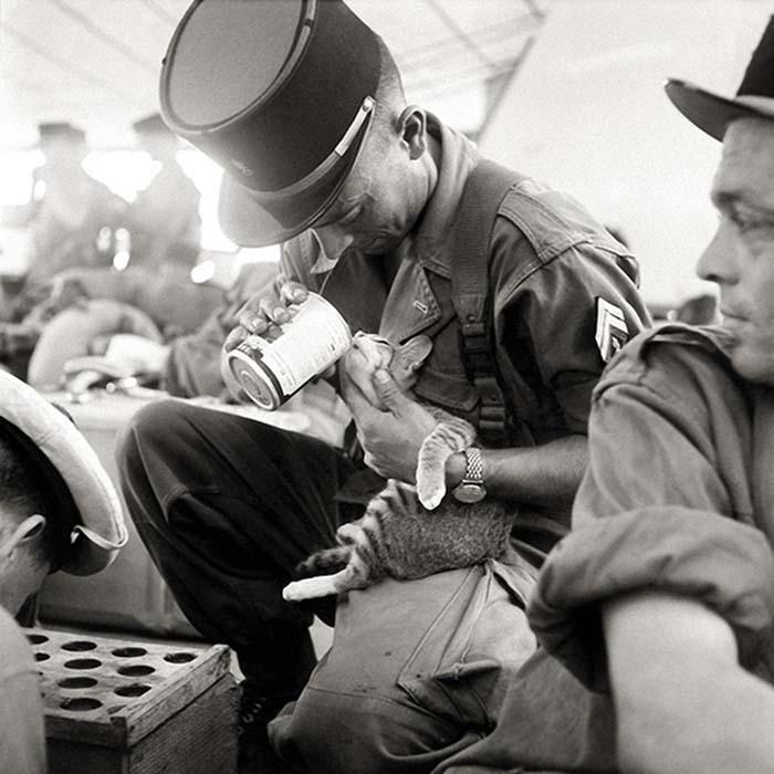gatos-y-soldados-amigos-de-guerra-12