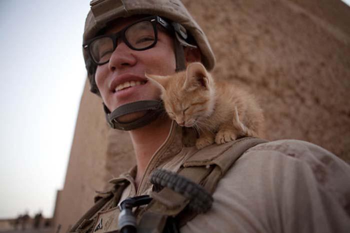 gatos-y-soldados-amigos-de-guerra-14