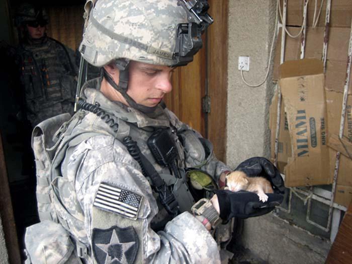 gatos-y-soldados-amigos-de-guerra-16