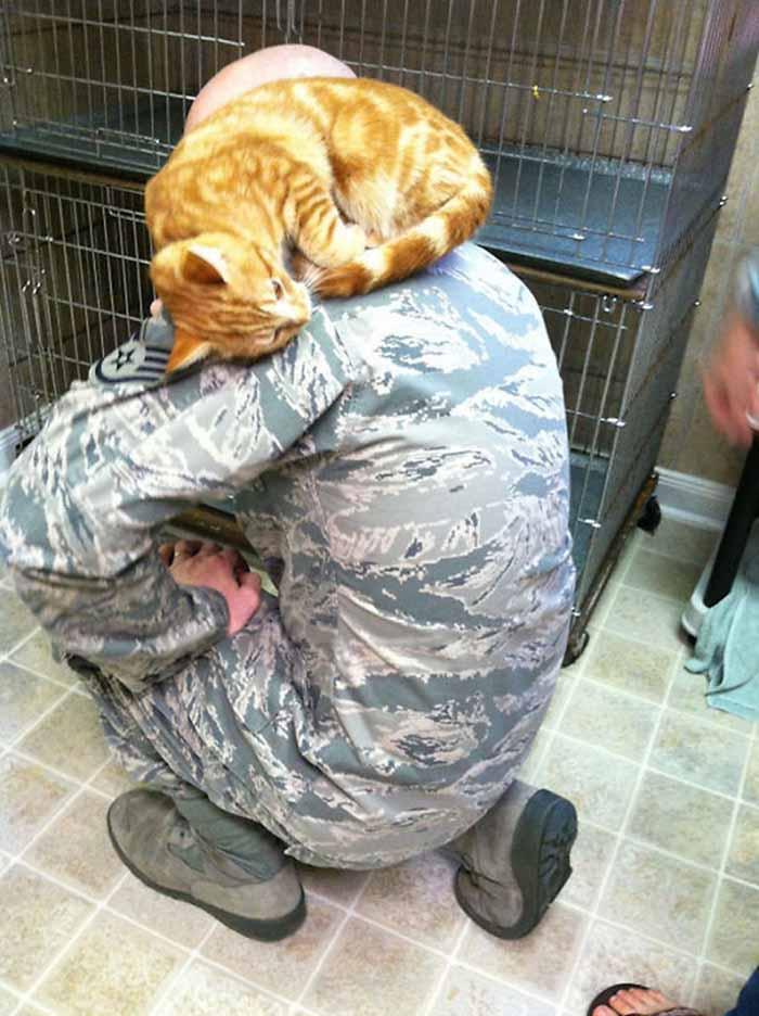 gatos-y-soldados-amigos-de-guerra-18
