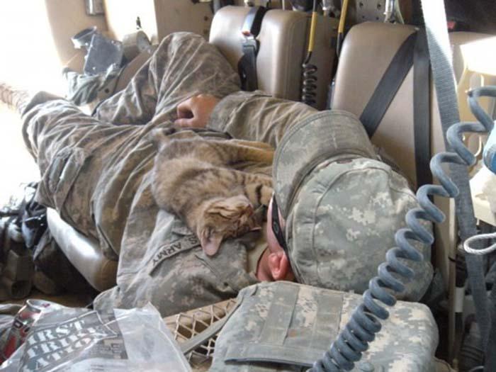 gatos-y-soldados-amigos-de-guerra-2