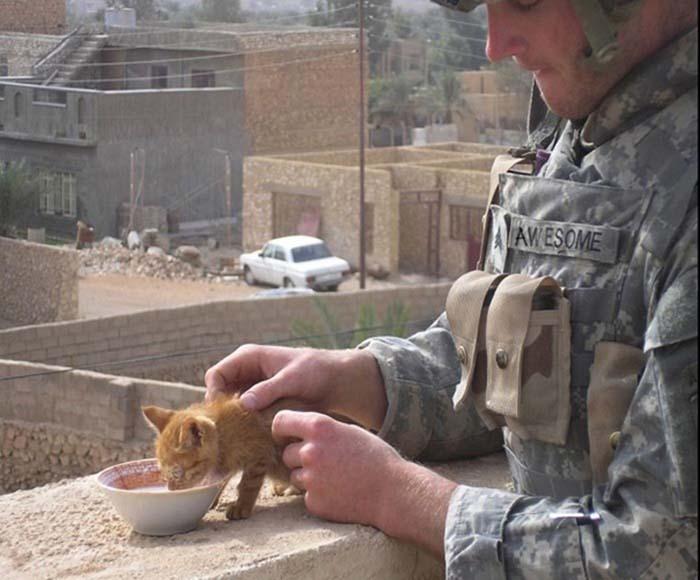 gatos-y-soldados-amigos-de-guerra-3