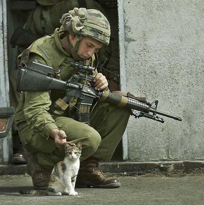 gatos-y-soldados-amigos-de-guerra-4