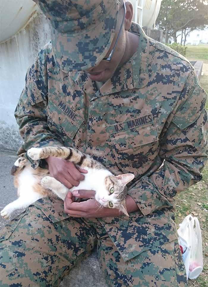 gatos-y-soldados-amigos-de-guerra-8