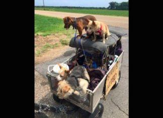 Hombre y sus once perros ahora tienen hogar