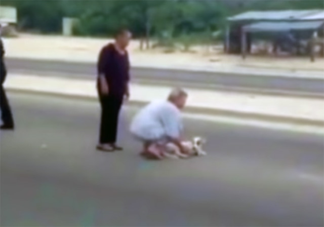 Mujer se atraviesa en medio de la vía para salvar a un perro