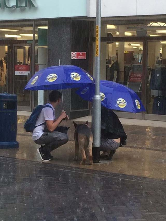 pareja-ayuda-a-un-perro-bajo-la-lluvia-2