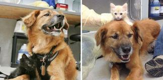 Perro sobreviviente del huracán katrina
