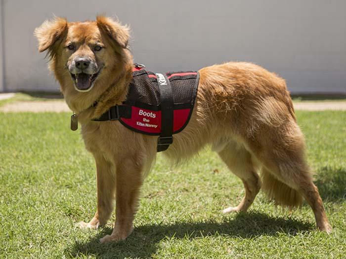 Perro sobrevivió a un huracán