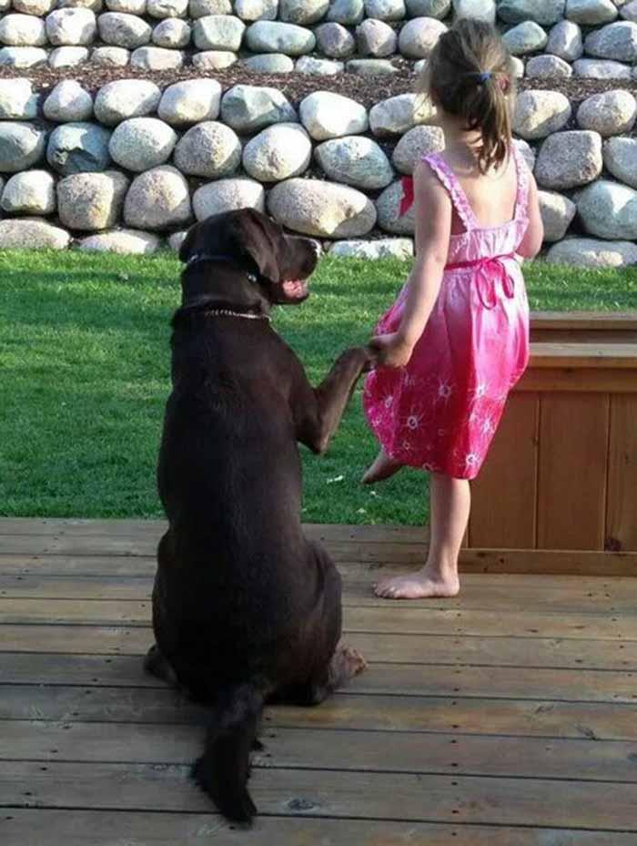 perros-parte-de-la-familia-10