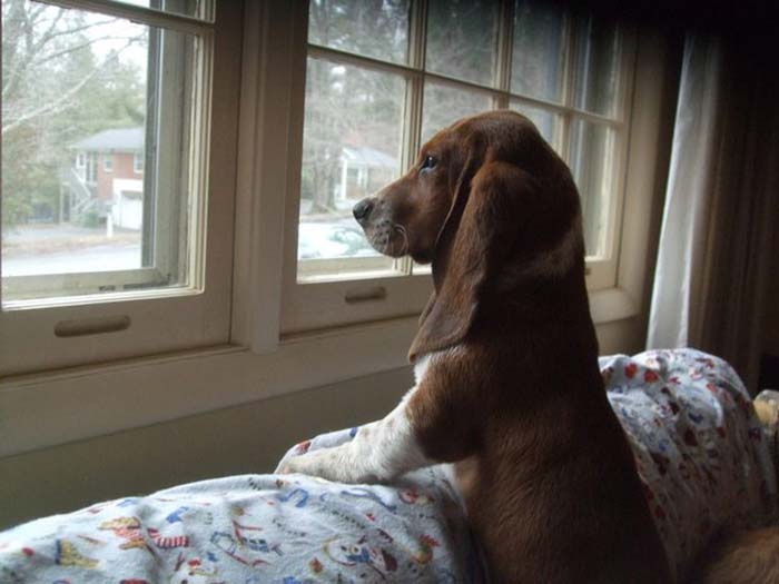 perros-parte-de-la-familia-15
