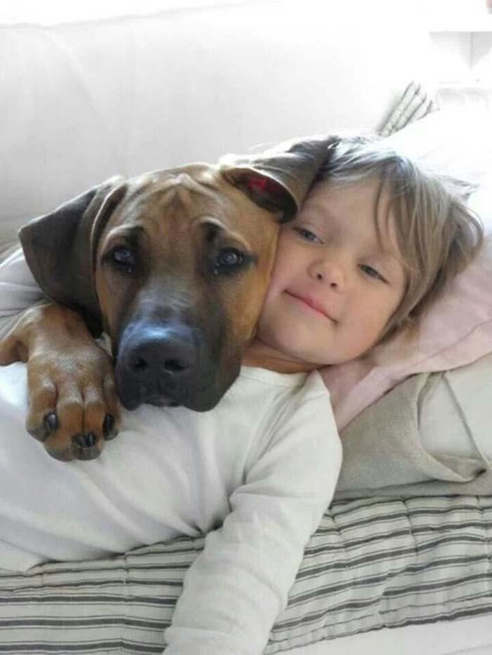 perros-parte-de-la-familia-2