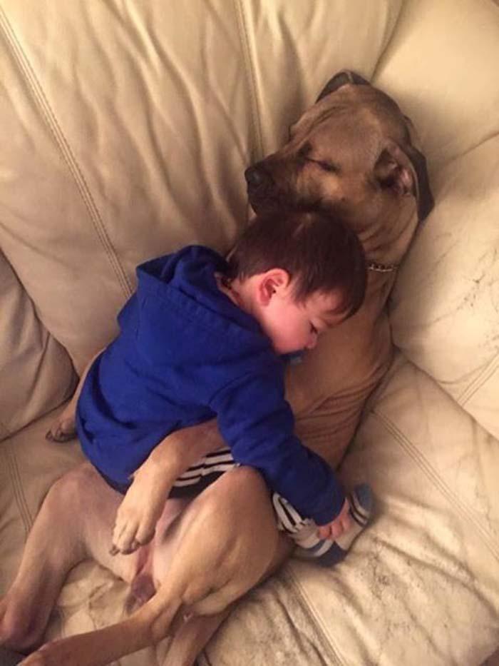 perros-parte-de-la-familia-3