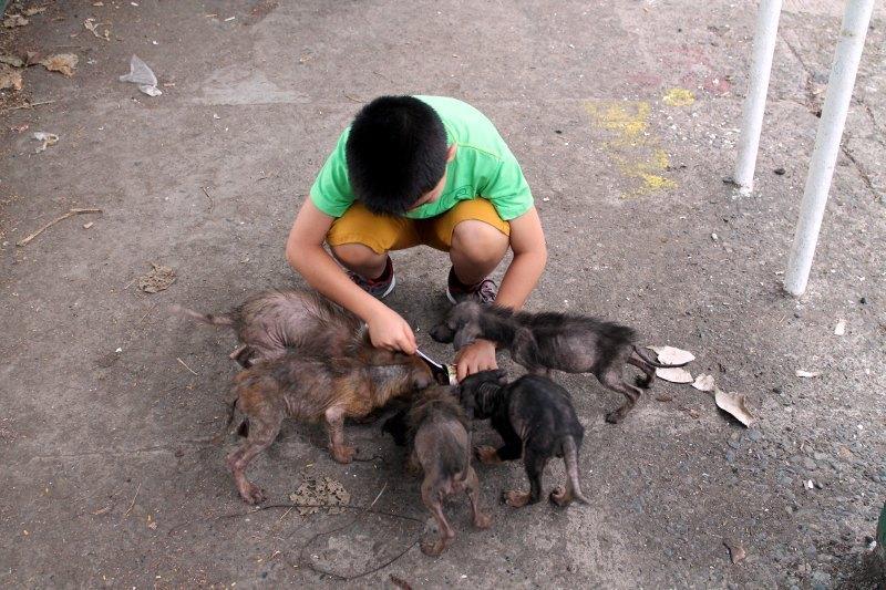 transformación-animales-gracias-a-niño-6
