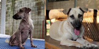 Transformación de animales gracias a un niño