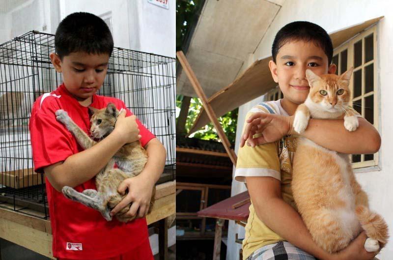 transformación-gato-gracias-a-niño
