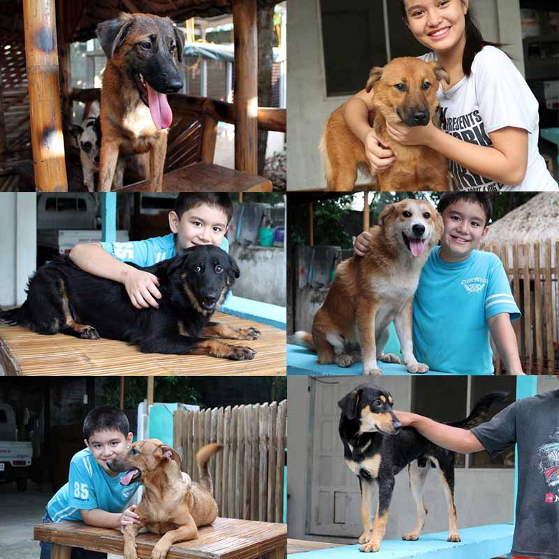 transformación-perros-gracias-a-niño