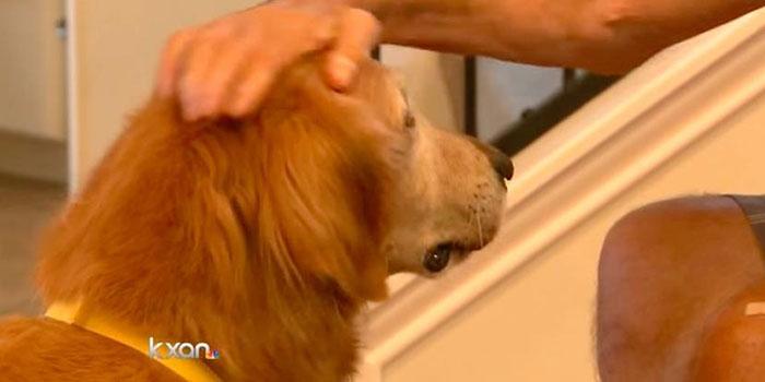 perro-cuida-a-su-padre-humano