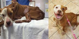La increíble transformación de una perra