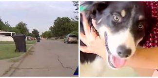 Perro callejero arriesgó su vida para salvar a una niña